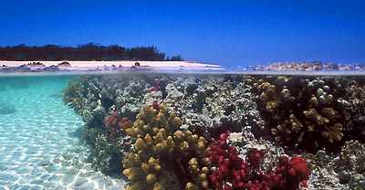 Fig08_Great barrier reef_400.jpg